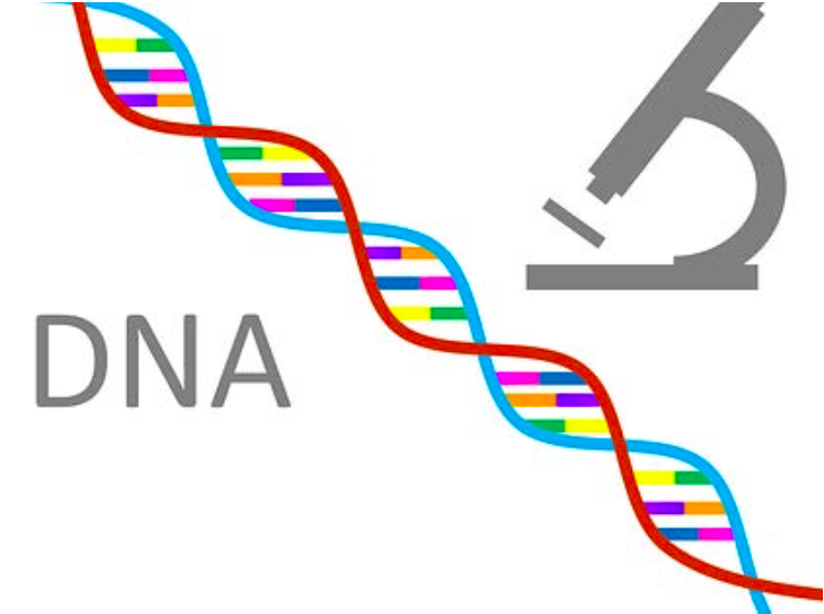 GOTCHA! HOW DNA, GENEALOGY & GENETICS ARE SOLVING DECADES LONG COLD CASES